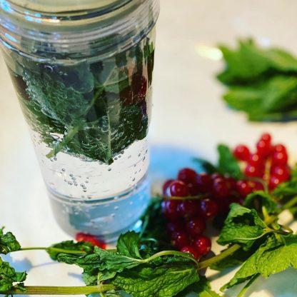 Hario Filter Bottle Mint
